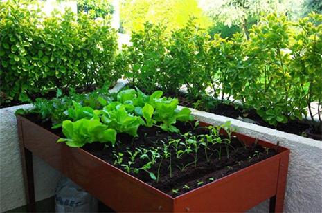 Aprende a montar tu huerta urbana con el taller de agricultura en balcones