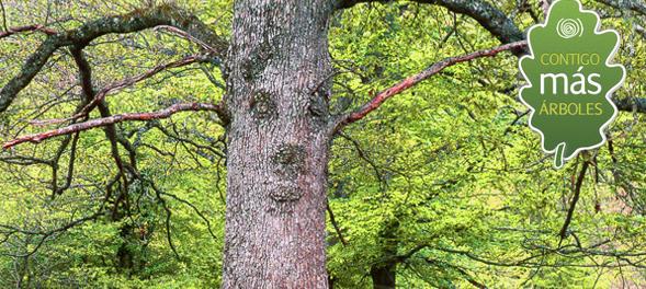 ¿Te animas a ayudar como voluntario en la plantación de árboles?