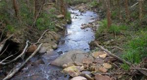 El arroyo Amunategi.FOTO: fundacion-biodiversidad.es.