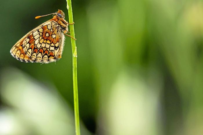 El fotógrafo Egoitz Ikaza impartirá en Getxo un taller de microfotografía de naturaleza